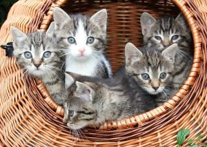 A basket of kittens--adorable!